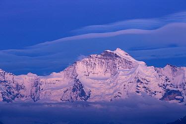 View of snow covered mountain summit at dusk, Jungfrau, Swiss Alps, Bernese Oberland, Switzerland, June  -  Bernd Rohrschneider/ FLPA