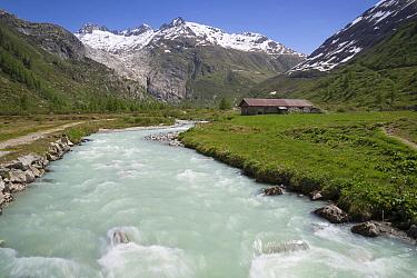 View of river in mountain valley, River Rhone, Grimsel Pass, Bernese Oberland, Switzerland, June  -  Bernd Rohrschneider/ FLPA