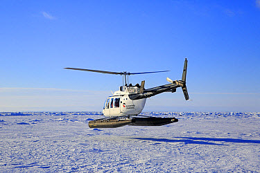Tourist helicopter in flight over pack ice, departing to visit Harp Seal (Pagophilus groenlandicus) colony, Magdalen Islands, Gulf of St. Lawrence, Quebec, Canada, March  -  Jurgen and Christine Sohns/ FLPA