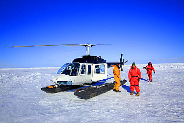Tourists with helicopter on pack ice, preparing to visit Harp Seal (Pagophilus groenlandicus) colony, Magdalen Islands, Gulf of St. Lawrence, Quebec, Canada, March  -  Jurgen and Christine Sohns/ FLPA