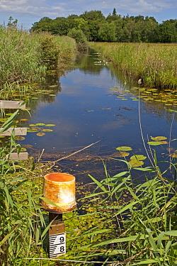 Water level depth marker in freshwater dyke, Sutton Fen RSPB Reserve, The Broads, Norfolk, England, July  -  Roger Tidman/ FLPA