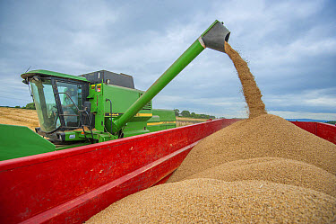 Barley (Hordeum vulgare) crop, John Deere combine harvester unloading harvested grain into trailer under cloudy sky, Pilling, Preston, Lancashire, England, August  -  John Eveson/ FLPA
