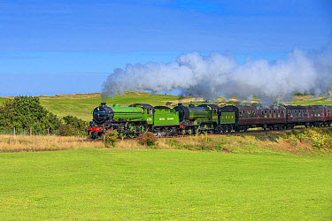 Steam trains and carriages, passing through golfcourse, North Norfolk Railway, Sheringham, Norfolk, England, August  -  Mike Powles/ FLPA