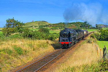 Steam train and carriages, passing through golfcourse with seaside town in background, North Norfolk Railway, Sheringham, Norfolk, England, August  -  Mike Powles/ FLPA