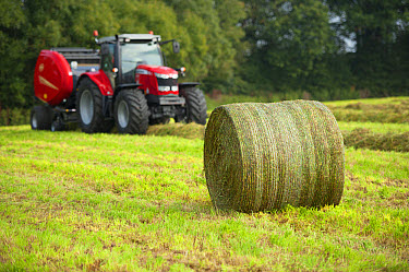 Round bale of silage in field, with tractor and round baler in background, Cheshire, England, September  -  John Eveson/ FLPA