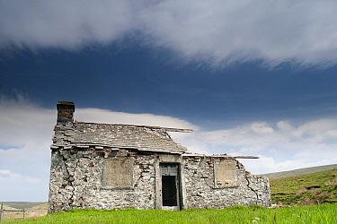 Abandoned shooting lodge on roadside of B from Hawes to Ingleton, North Yorkshire, England, May  -  Wayne Hutchinson/ FLPA