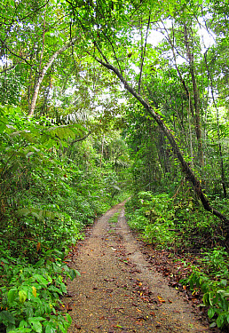 Track through tropical forest, Pipeline Road, Panama, November  -  Neil Bowman/ FLPA