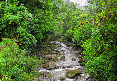 River flowing through tropical forest, Canopy Lodge, El Valle, Panama, October  -  Neil Bowman/ FLPA