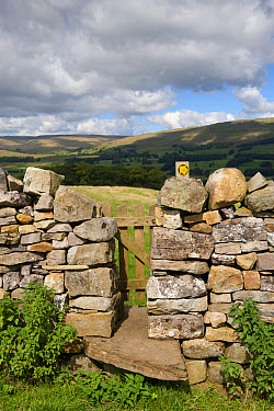 Stile and gate in drystone wall on public footpath, near Burtersett, Hawes, Wensleydale, Yorkshire Dales National Park, North Yorkshire, England, August  -  Wayne Hutchinson/ FLPA