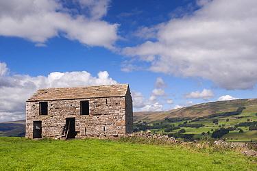 Derelict stone barn in farmland, Wensleydale, Yorkshire Dales National Park, North Yorkshire, England, August  -  Wayne Hutchinson/ FLPA