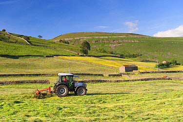 Hurlimann tractor with tedder, turning hay in upland meadow, Muker, Swaledale, Yorkshire Dales National Park, North Yorkshire, England, June  -  Wayne Hutchinson/ FLPA