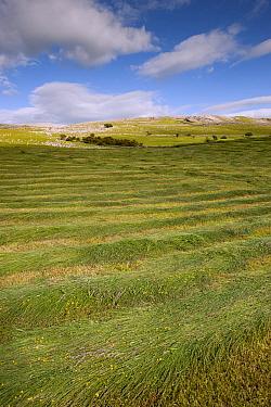 Newly mowed upland hay meadow, Cumbria, England, June  -  Wayne Hutchinson/ FLPA