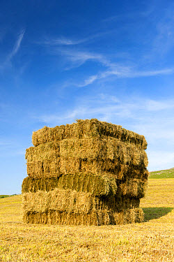 Bales of hay, stacked in flat eight system on field, Cumbria, England, July  -  Wayne Hutchinson/ FLPA