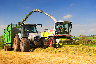Claas Jaguar self propelled forage harvester, chopping grass and loading Hurlimann tractor with trailer for silage to be used as winter livestock feed, Cumbria, England, May  -  Wayne Hutchinson/ FLPA