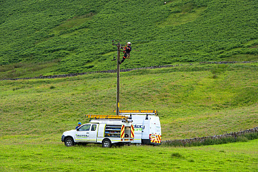 Mains electric technicians repairing cable on rural electricity pole, Cumbria, England, July  -  Wayne Hutchinson/ FLPA