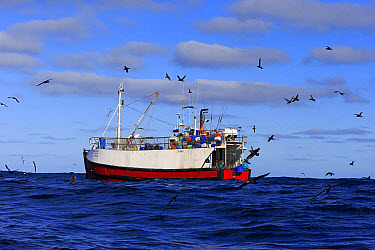 Trawler fishing at sea, being followed by seabirds, including albatrosses, petrels and skuas, Cape of Good Hope, Western Cape, South Africa, June  -  Jurgen and Christine Sohns/ FLPA