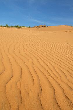 Ripples on coastal sand dunes, Phan Thiet, Binh Thuan Province, Vietnam, December  -  Colin Marshall/ FLPA