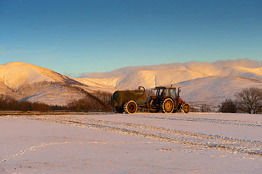 Tractor with muckspreader, spreading slurry on snow covered field in evening sunlight, Howgill Fells, Cumbria, England, January  -  Wayne Hutchinson/ FLPA