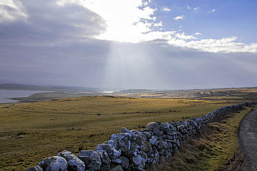 Looking in land along Loch Gruinart from the west side. Dry stone wall  -  David Hosking/ FLPA