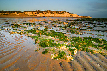 View of sandy beach and chalk cliffs at low tide, at sunrise, Kingsgate Bay, Broadstairs, Kent, England, August  -  Robert Canis/ FLPA