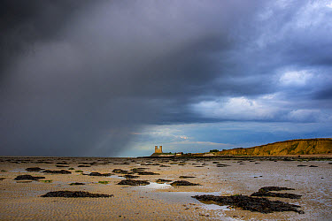 View of rain sweeping across sandy beach at low tide, with th Century ruined church in distance, St. Mary's Church, Reculver, Kent, England, August  -  Robert Canis/ FLPA