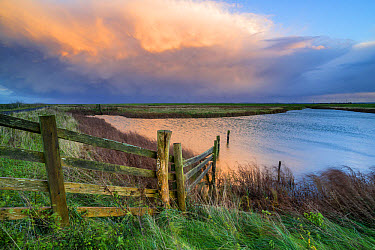 View of cattle fencing and water-filled ditch on coastal grazing marsh habitat, with receding storm clouds at sunset, Elmley Marshes N.N.R., North Kent Marshes, Isle of Sheppey, Kent, England, October  -  Robert Canis/ FLPA