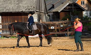 Horse, child having riding lesson, on Noriker, rare horse breed, Tweng, Salzburg, Austria  -  Chris & Tilde Stuart/ FLPA