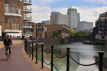Woman cycling beside waterway with redevelopment, Canary Wharf in distance, Limehouse Basin, Limehouse, Tower Hamlets, London, England, september  -  Angela Hampton/ FLPA