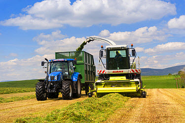 Claas Jaguar self-propelled forage harvester, chopping grass and loading New Holland tractor with trailer for silage to be used as livestock feed, Cumbria, England, June  -  Wayne Hutchinson/ FLPA