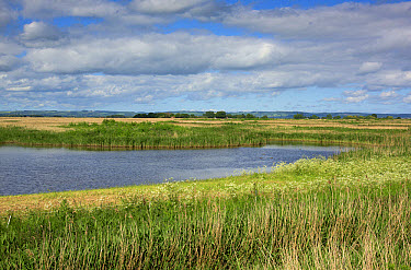 View of lagoon and reedbed habitat, Blacktoft Sands RSPB Nature Reserve, East Yorkshire, England, June  -  John Eveson/ FLPA