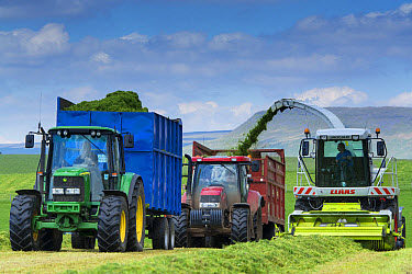 Claas Jaguar self-propelled forage harvester, chopping grass and loading Case and John Deere tractors with trailers for silage to be used as livestock feed, Cumbria, England, June  -  Wayne Hutchinson/ FLPA