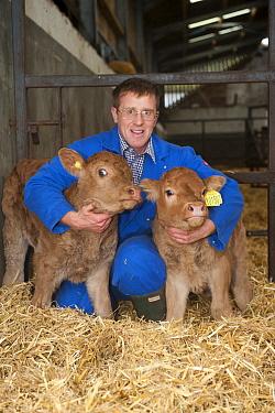 Domestic Cattle, two newborn embryo transplant calves, standing with farmer on straw bedding, Scotland, November  -  Wayne Hutchinson/ FLPA