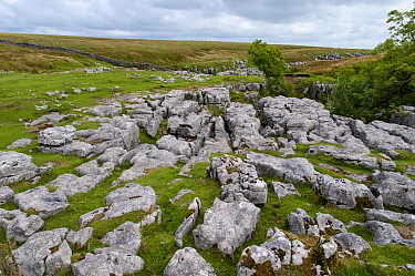 Outcrops of limestone showing typical erosion patterns of grikes and clints on flanks of hill, Ingleborough, Yorkshire Dales N.P., North Yorkshire, England, August