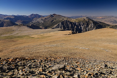 The Dana Plateau, high altitude fell-field at 11-12,000 ft on the edge of Yosemite National Park, Sierra Nevada; California.