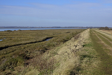 The old embankment footpath from Brightlingsea to Wivenhoe, with the River Colne and salt Marsh. Essex.