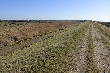 The old embankment footpath looking back towards Brightlingsea with the River Colne, reed beds and floodplain. Essex.