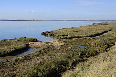 Looking out over salt marsh to the River Colne near Brightlingsea Essex.