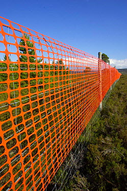 Orange mesh attached to deer fence to increase visibility and reduce fence collisions of Capercaillie and Black grouse, a common cause of their fatality  -  Pete Cairns/ npl