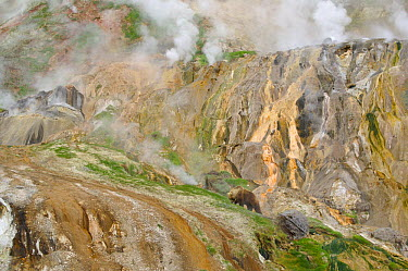 Stain glass wall and Geyser River in the Valley of the Geysers, Kronotsky Zapovednik, Kamchatka, Far East Russia, May 2006 Brown bears like to gather in the warm valley in spring to feed on fresh gras...  -  Igor Shpilenok/ npl