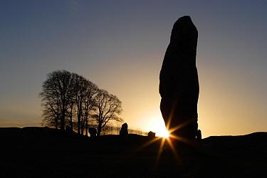 Silhouette of stone megalith at sunrise, Avebury Stone Circle (World Heritage Site)  -  Michael Hutchinson/ npl