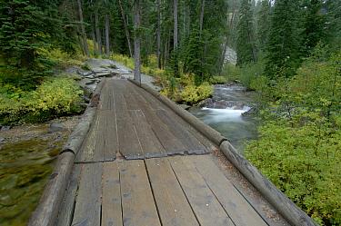 Bridge at Cascade Creek, Jenny Lake, Grand Teton National Park, Wyoming, USA  -  Rolf Nussbaumer/ npl