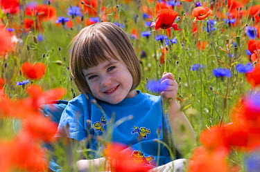 Red Poppy (Papaver rhoeas) and girl and Cornflower, Scotland United Kingdom  -  Niall Benvie/ npl