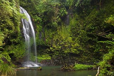 Cascade sacree, The sacred waterfall, Montagne d'Ambre National Park, North Madagascar  -  Inaki Relanzon/ npl