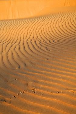 Animal tracks in sand dune ripples, Liwa, UAE  -  Hanne & Jens Eriksen/ npl