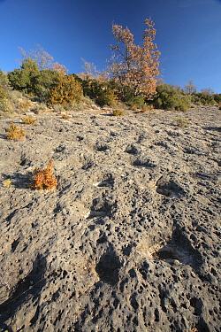 Imprints thrught to be cretaceous ray traces Conca de Tremp, Pyrenees, L?rida, Spain  -  Juan Manuel Borrero/ npl