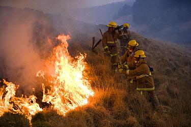 Firemen beating out a grass fire on moorland, Lancashire, UK  -  Jason Smalley/ npl