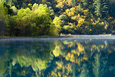 Trees and reflection in water, Juizhaigou national reserve, UNESCO world heritage site, Sichuan province, China, October 06, 'Wild China' series  -  Gavin Maxwell/ npl