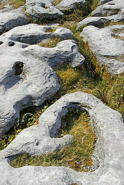 Limestone Pavement, The Burren, County Clare, Ireland  -  Adrian Davies/ npl