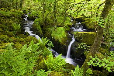 Stream in lush green woodland, Dartmoor NP, Devon, UK  -  Adam Burton/ npl