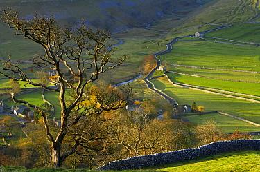 Autumn colours at Arncliffe, Littondale, Yorkshire Dales National Park, England, UK  -  David Noton/ npl